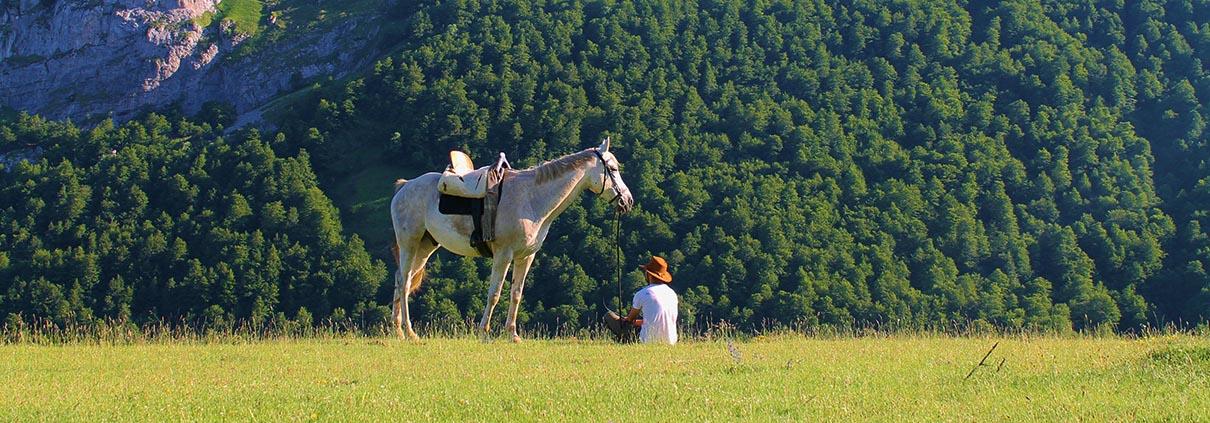 caballo_1210x423